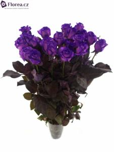 Fialová růže - prodej- více růží