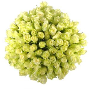 Kytice - Kytice 100 bílých růží ATHENA 40cm