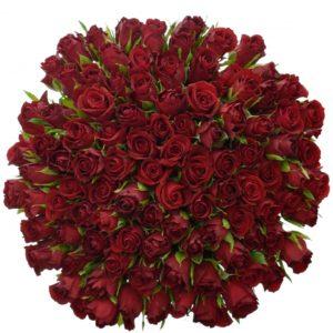 Kytice - Kytice 100 červených růží FURIOSA 50cm
