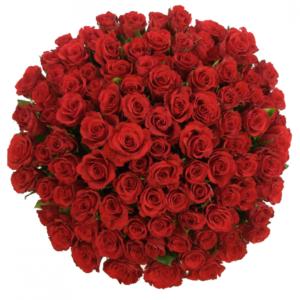 Kytice - Kytice 100 červených růží RED CORVETTE 50cm