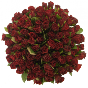 Kytice - Kytice 100 červených růží TORERO 40cm (S)