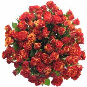 Kytice - Kytice 100+ květů růží FIRE FLASH 50cm/4+