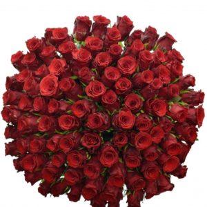 Kytice - Kytice 100 rudých růží INCREDIBLE 50cm