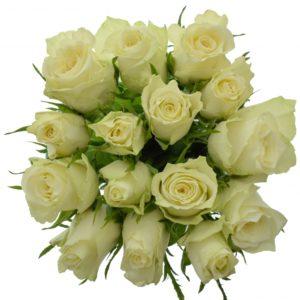 Kytice - Kytice 15 bílých růží ATHENA 40cm