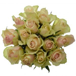 Kytice - Kytice 15 krémovozelených růží LA BELLE 50cm