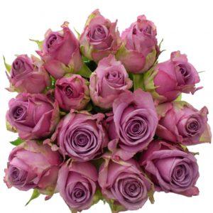Kytice - Kytice 15 modrofialových růží COOL WATER 50cm
