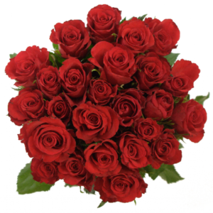 Kytice - Kytice 25 červených růží RED CORVETTE 50cm