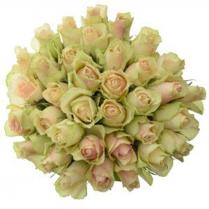Kytice - Kytice 35 krémovozelených růží LA BELLE 50cm