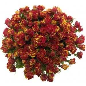 Kytice - Kytice 35 žíhaných trsových růží FIRE FLASH 50cm