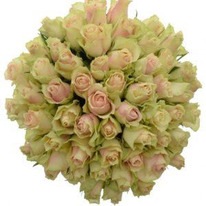 Kytice - Kytice 55 krémovozelených  růží LA BELLE 50cm