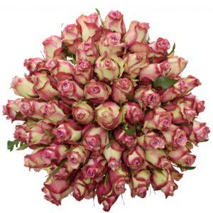 Kytice - Kytice 55 luxusních růží MELINA 80cm