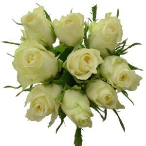 Kytice - Kytice 9 bílých růží ATHENA 35cm