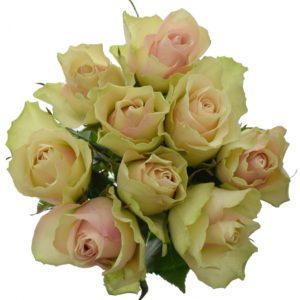 Kytice - Kytice 9 krémovozelených růží LA BELLE 50cm