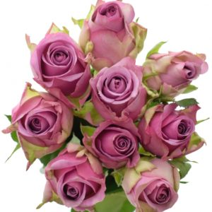 Kytice - Kytice 9 modrofialových růží COOL WATER 50cm